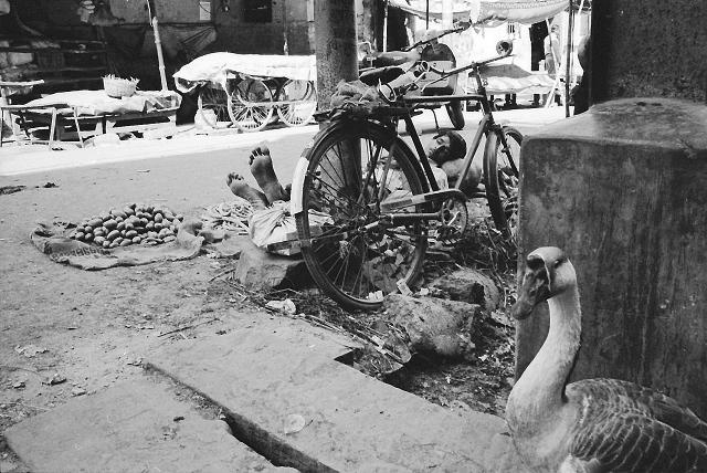 varanasi, leica, street photography, kodak, travel, india, goose, sleeping man,