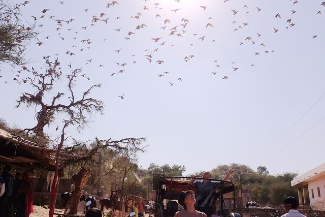 amer, safari, jeep, birds flying above, travel, blog, wanderlust, india, jaipur