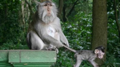 ubud, monkeys, monkey forest, bali, travel