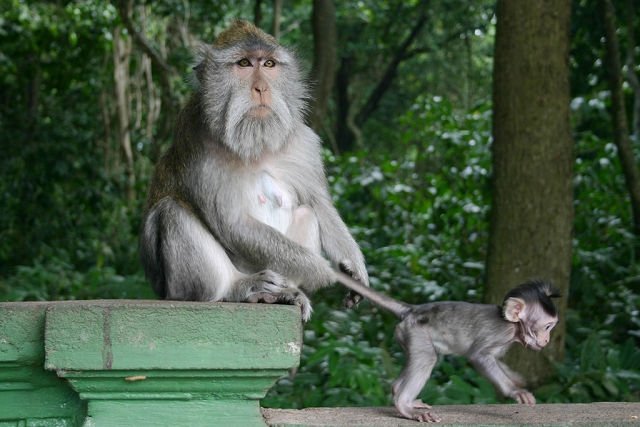 ubud, monkeys, monkey forest, bali, travel